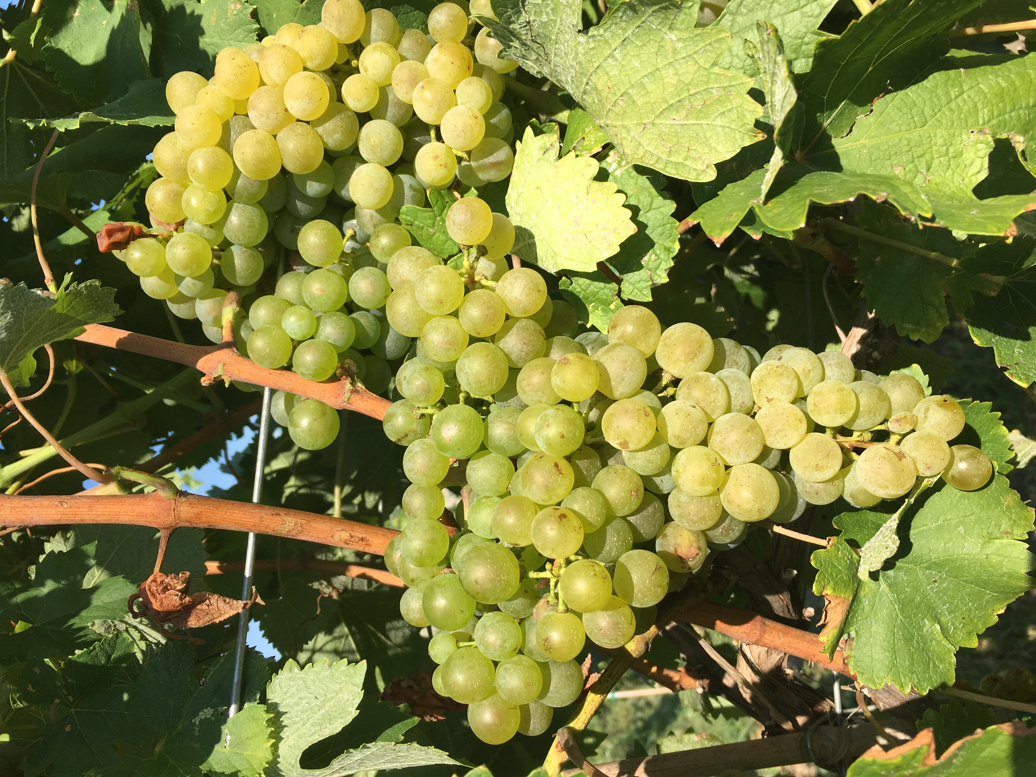 Prairie  Fire Winery & Vineyard